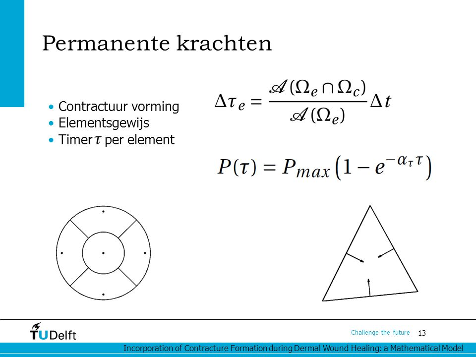 Incorporation of Contracture Formation during Dermal Wound Healing: a Mathematical Model 13 Challenge the future Permanente krachten Contractuur vorming Elementsgewijs Timer per element