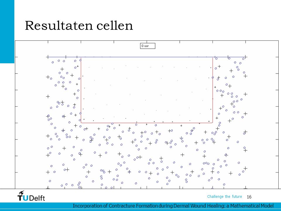 Incorporation of Contracture Formation during Dermal Wound Healing: a Mathematical Model 16 Challenge the future Resultaten cellen