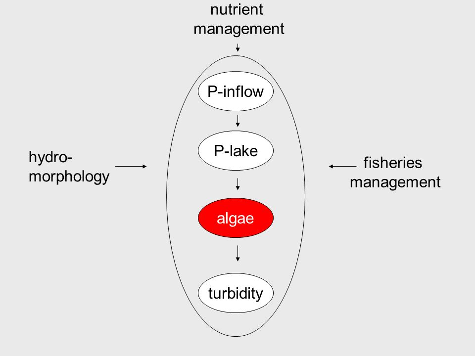 P-inflow P-lake algae turbidity nutrient management hydro- morphology fisheries management