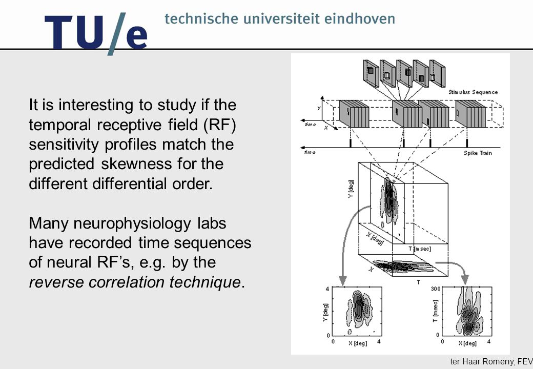 ter Haar Romeny, FEV It is interesting to study if the temporal receptive field (RF) sensitivity profiles match the predicted skewness for the different differential order.