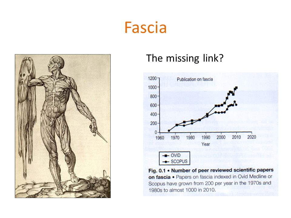 Fascia The missing link?