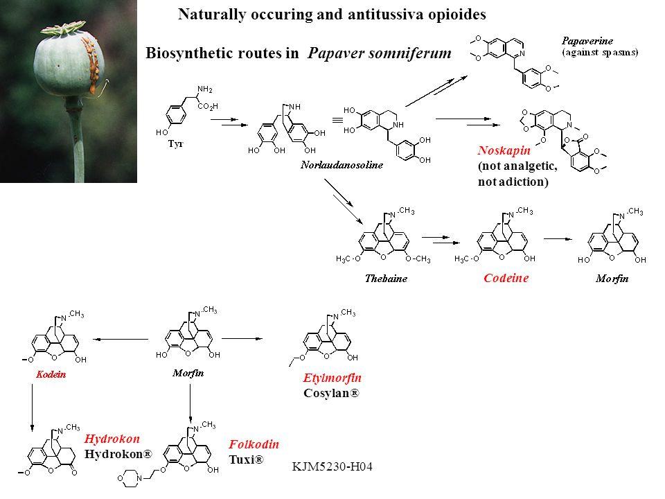 KJM5230-H04 Biosynthetic routes in Papaver somniferum Codeine Noskapin (not analgetic, not adiction) Naturally occuring and antitussiva opioides Etylmorfin Cosylan® Hydrokon Hydrokon® Folkodin Tuxi®