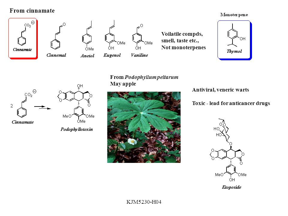 KJM5230-H04 From cinnamate Voilatile compds, smell, taste etc., Not monoterpenes From Podophyllum peltarum May apple Antiviral, veneric warts Toxic - lead for anticancer drugs