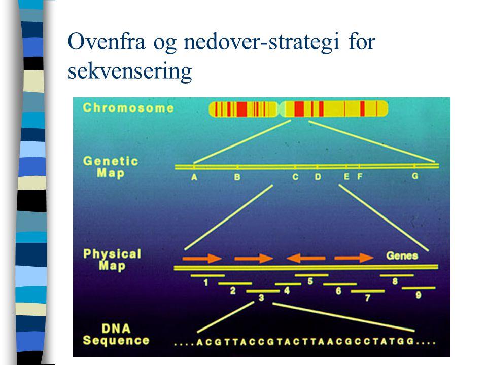 Ovenfra og nedover-strategi for sekvensering