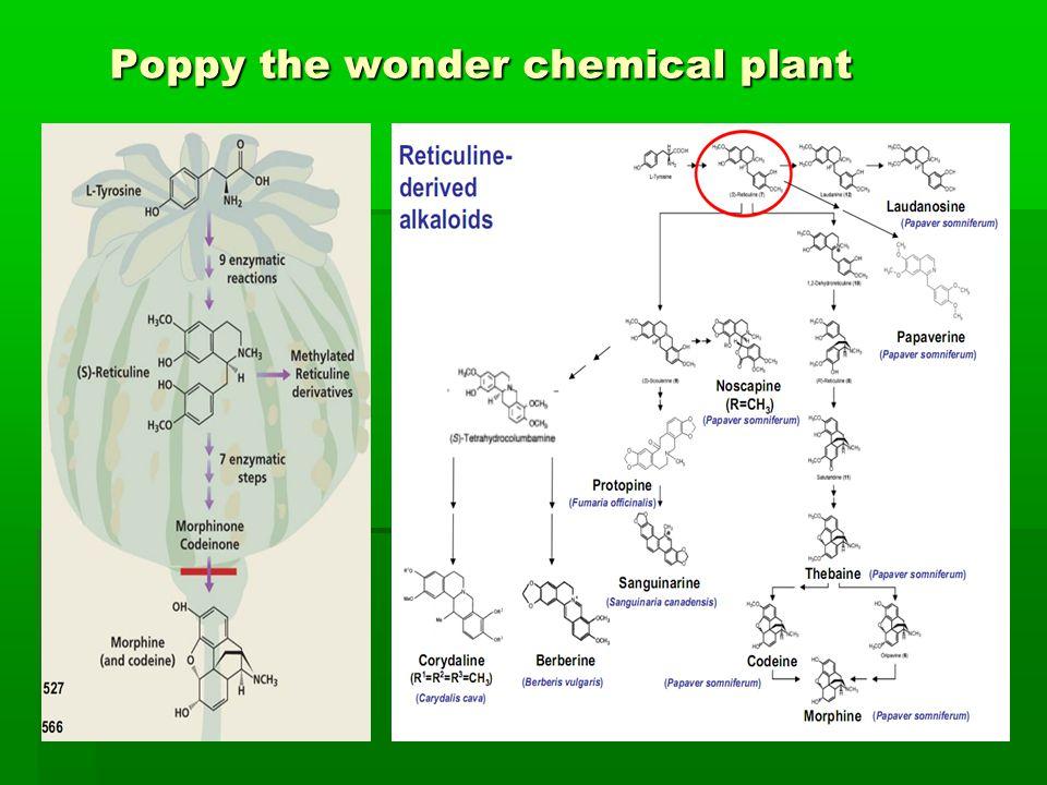 Poppy the wonder chemical plant