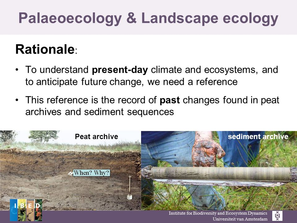 Institute for Biodiversity and Ecosystem Dynamics Universiteit van Amsterdam Palaeoecology & Landscape ecology Rationale : To understand present-day climate and ecosystems, and to anticipate future change, we need a reference This reference is the record of past changes found in peat archives and sediment sequences Peat archive sediment archive