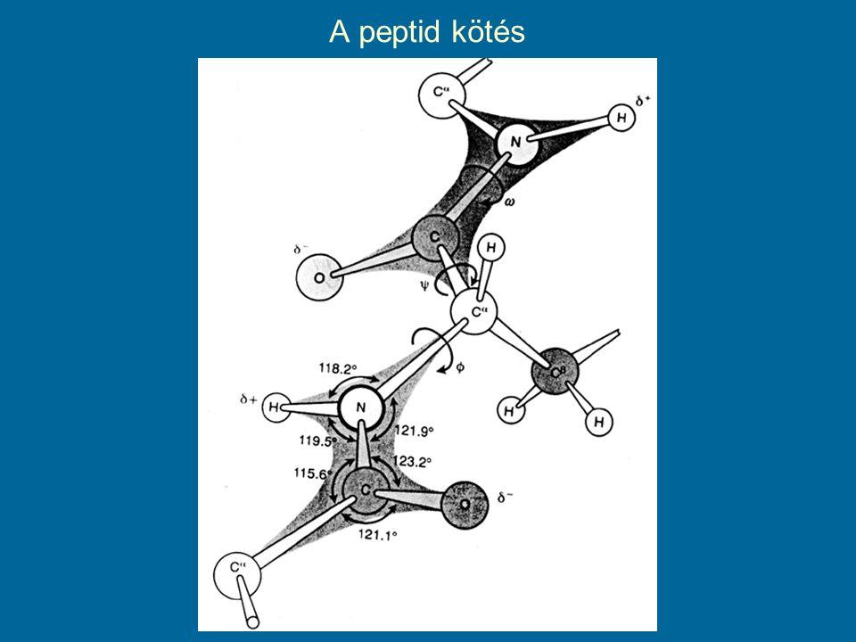 A peptid kötés