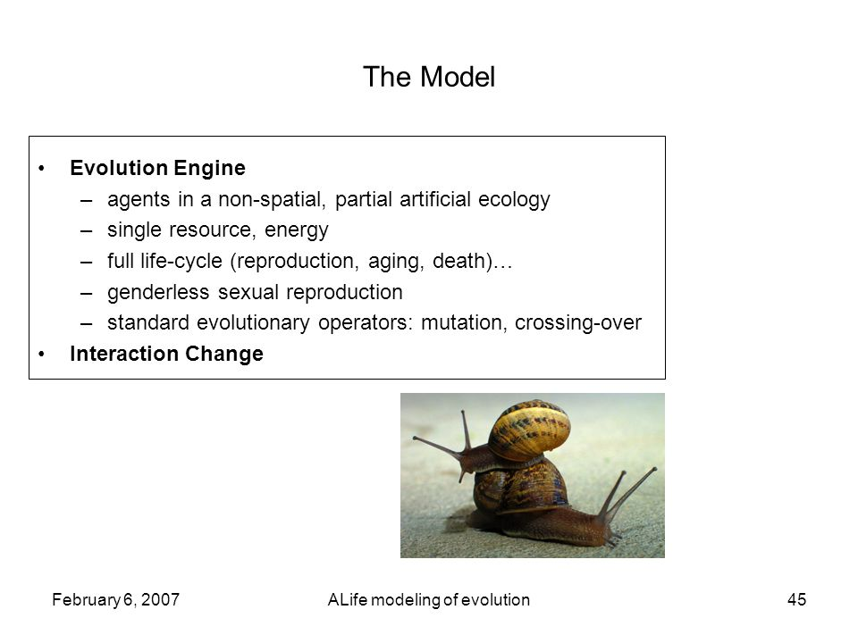 February 6, 2007ALife modeling of evolution45 The Model Evolution Engine –agents in a non-spatial, partial artificial ecology –single resource, energy –full life-cycle (reproduction, aging, death)… –genderless sexual reproduction –standard evolutionary operators: mutation, crossing-over Interaction Change