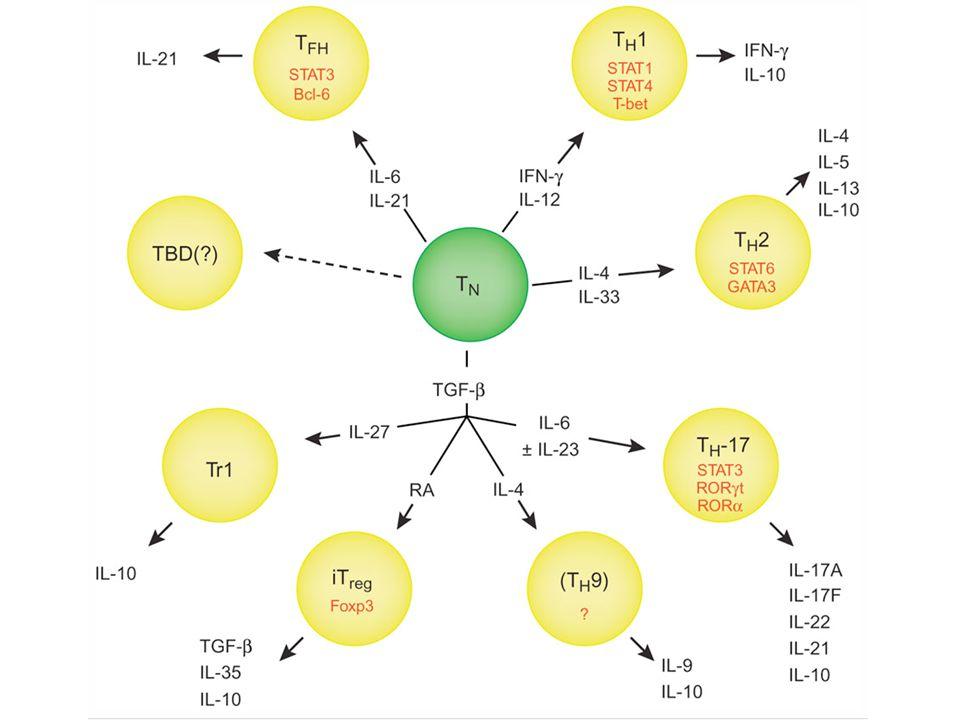 Diagnostics – prognosis in autoimmune diseases - Autoantibodies in diagnostics – marker - Prognosis (timelag) until disease develops RJ13