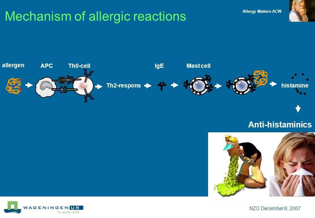 Allergy Matters-ACW NZO December 6, 2007 Mechanism of allergic reactions allergen IgEAPCTh0-cell Th2-respons Mast cell histamine Anti-histaminics