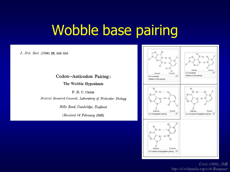 Wobble base pairing Crick (1966), JMB http://nl.wikipedia.org/wiki/Basepaar