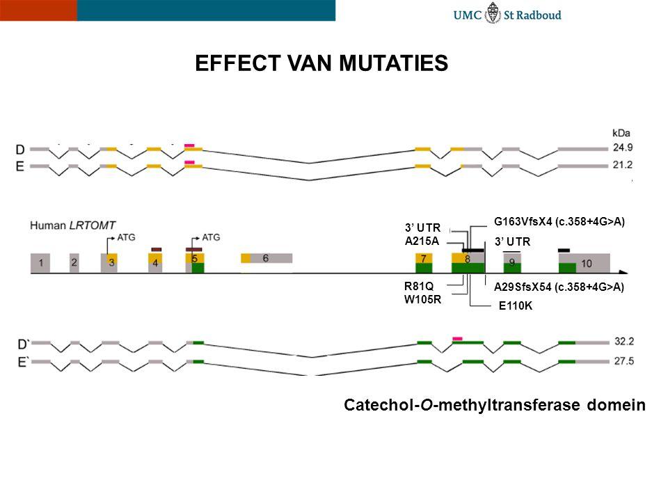 EFFECT VAN MUTATIES E110K A29SfsX54 (c.358+4G>A) W105R R81Q A215A G163VfsX4 (c.358+4G>A) 3' UTR Catechol-O-methyltransferase domein