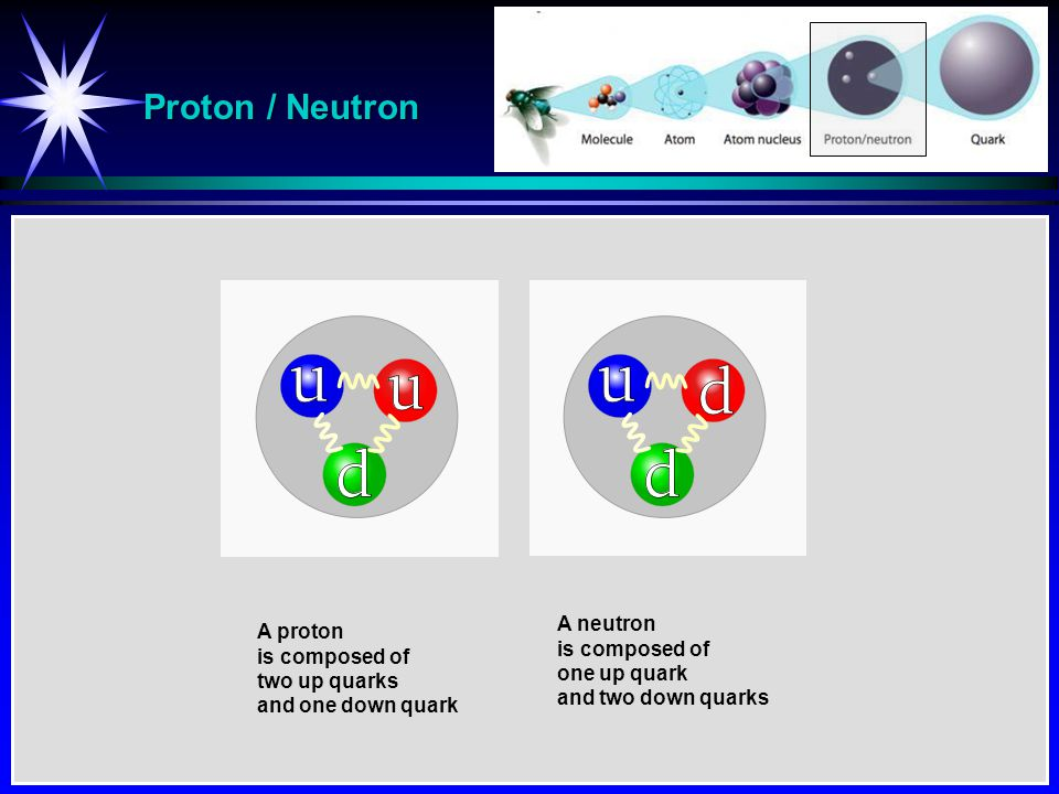 Proton / Neutron A proton is composed of two up quarks and one down quark A neutron is composed of one up quark and two down quarks