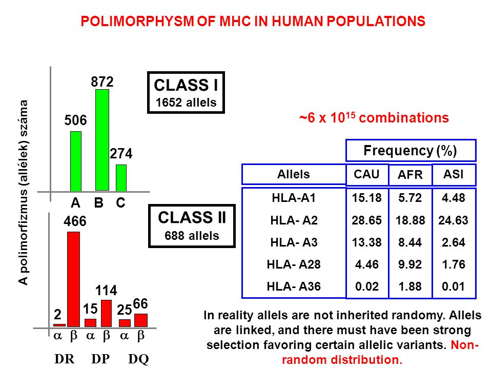 In reality allels are not inherited randomy. Allels are linked, and there must have been strong selection favoring certain allelic variants. Non- rand