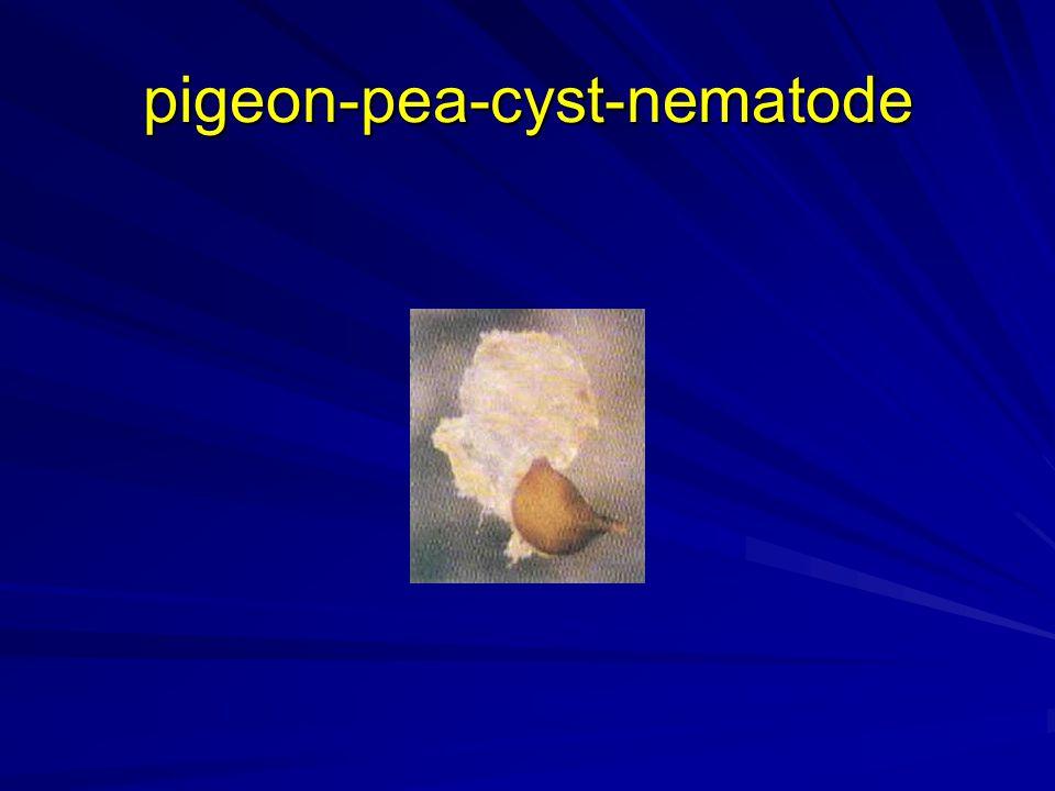 pigeon-pea-cyst-nematode