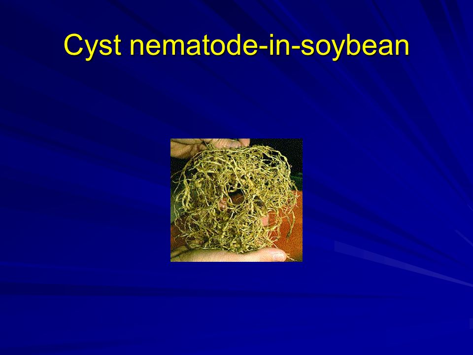 Cyst nematode-in-soybean