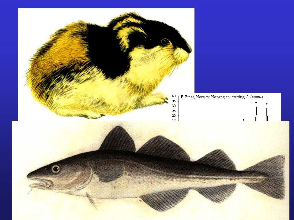 G. O. Sars' cod