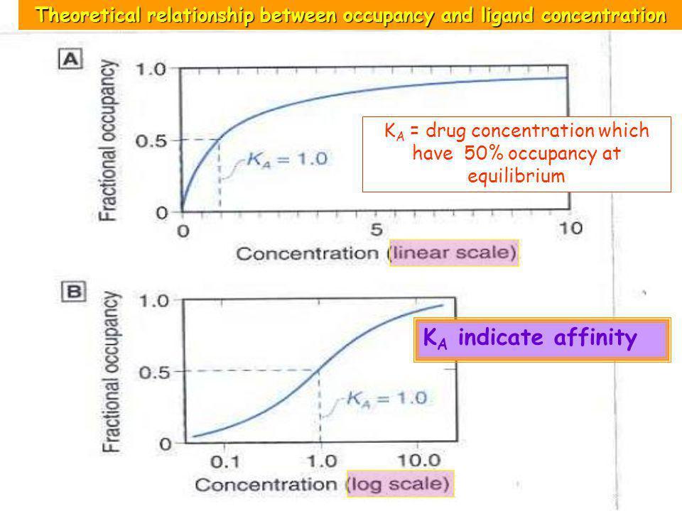 12 KA KA = drug concentration which have 50% occupancy at equilibrium KA KA indicates Affinity; ความชอบจับของยากับ receptors 50 % occupancy High K A ;
