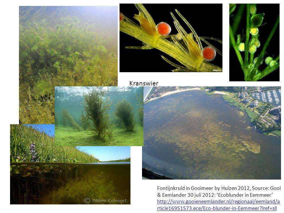 Fontijnkruid in Gooimeer by Huizen 2012, Source: Gooi & Eemlander 30 juli 2012: 'Ecoblunder in Eemmeer' http://www.gooieneemlander.nl/regionaal/eemland/a rticle16951573.ece/Eco-blunder-in-Eemmeer?lref=sll http://www.gooieneemlander.nl/regionaal/eemland/a rticle16951573.ece/Eco-blunder-in-Eemmeer?lref=sll Kranswier
