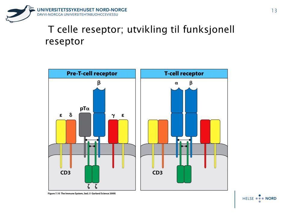 13 T celle reseptor; utvikling til funksjonell reseptor