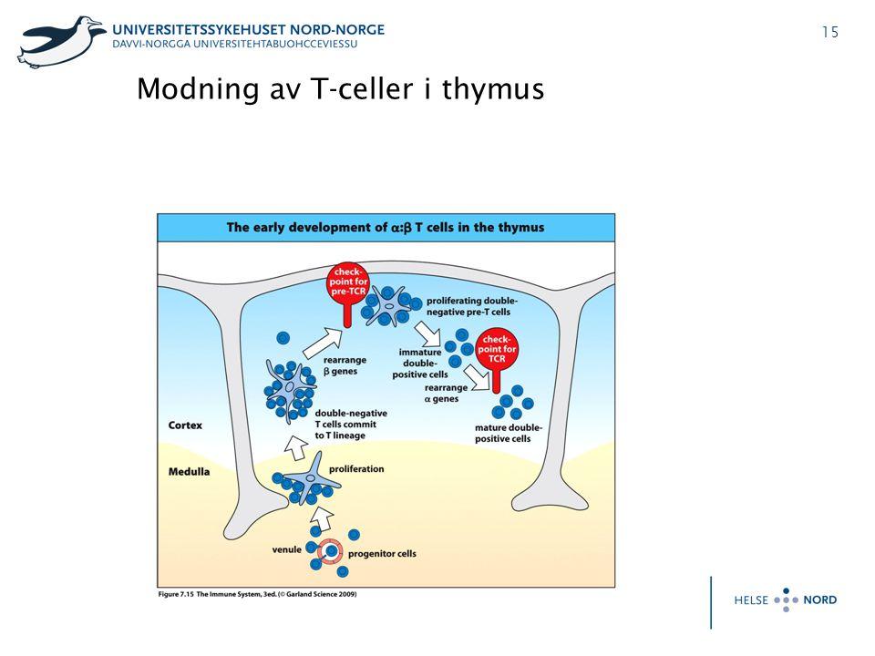 15 Modning av T-celler i thymus