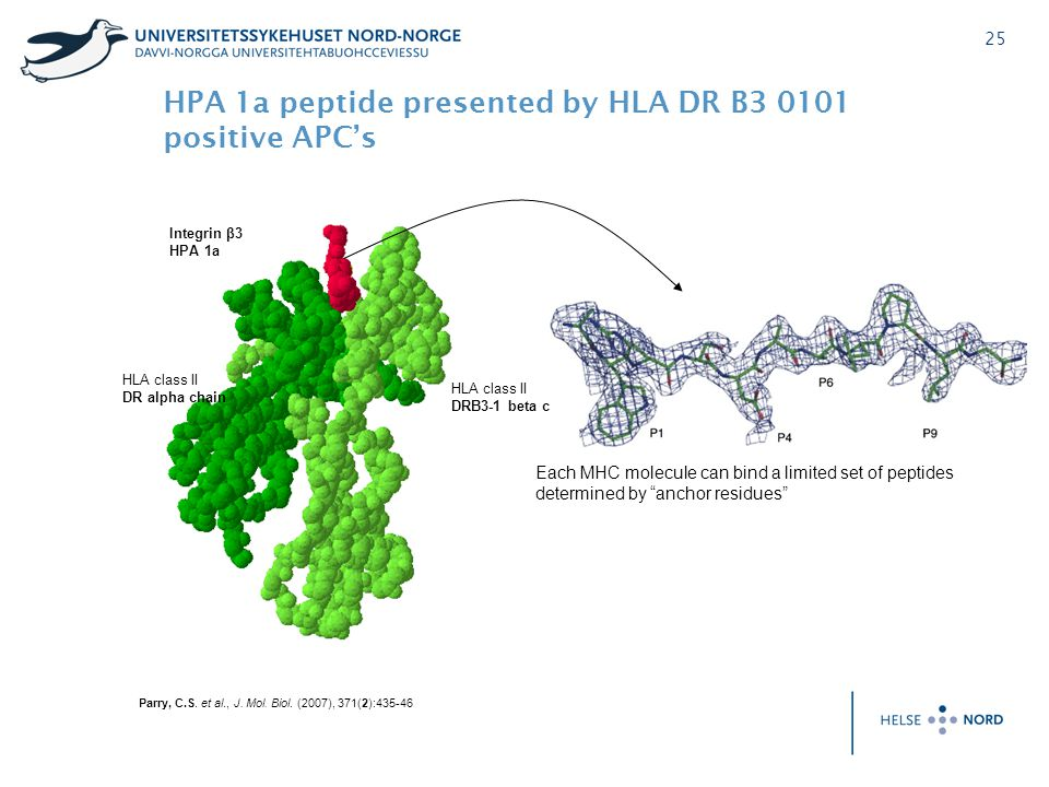 25 HLA class II DR alpha chain Integrin β3 HPA 1a Parry, C.S. et al., J. Mol. Biol. (2007), 371(2):435-46 HLA class II DRB3-1 beta chain Each MHC mole