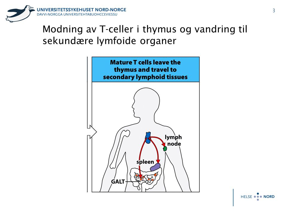 24 Foetal/Neonatal alloimmun thrombocytopenia (FNAIT) HPA 1bb mother HPA 1ab foetus Anti-HPA 1a