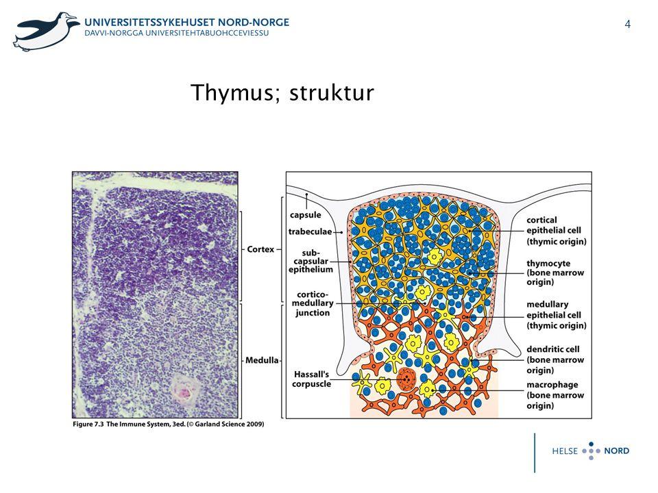 5 Thymus involusjon