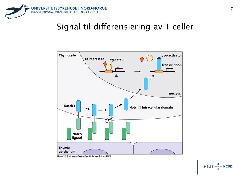 7 Signal til differensiering av T-celler