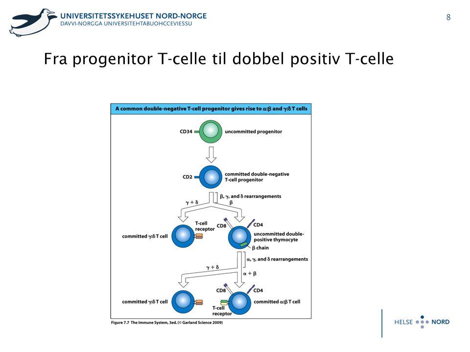 8 Fra progenitor T-celle til dobbel positiv T-celle