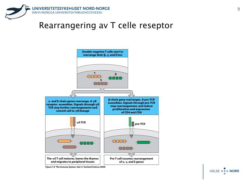 10 Rearrangering av T celle reseptor; beta kjeden