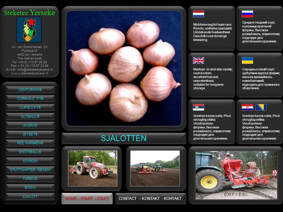 Steketee Yerseke SJALOTTEN Средне поздний сорт; луковица круглыой формы; Высокая рожайность; еприхотлив; подходит для длительного хранения.