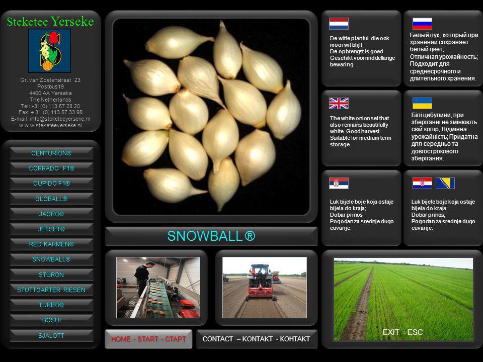 Steketee Yerseke SNOWBALL ® De witte plantui, die ook mooi wit blijft.