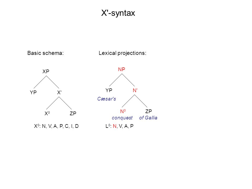 XP X' X0X0 YP ZP NP N' N0N0 YP ZP X'-syntax X 0 : N, V, A, P, C, I, DL 0 : N, V, A, P Basic schema: Cæsar's conquestof Gallia Lexical projections:
