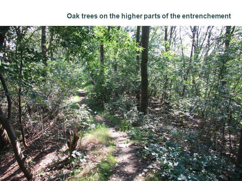 Oak trees on the higher parts of the entrenchement