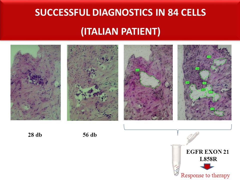 28 db56 db EGFR EXON 21 L858R SUCCESSFUL DIAGNOSTICS IN 84 CELLS (ITALIAN PATIENT) SUCCESSFUL DIAGNOSTICS IN 84 CELLS (ITALIAN PATIENT) Response to th