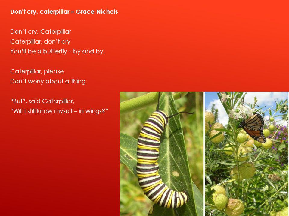 Don't cry, caterpillar – Grace Nichols Don't cry, Caterpillar Caterpillar, don't cry You'll be a butterfly – by and by.