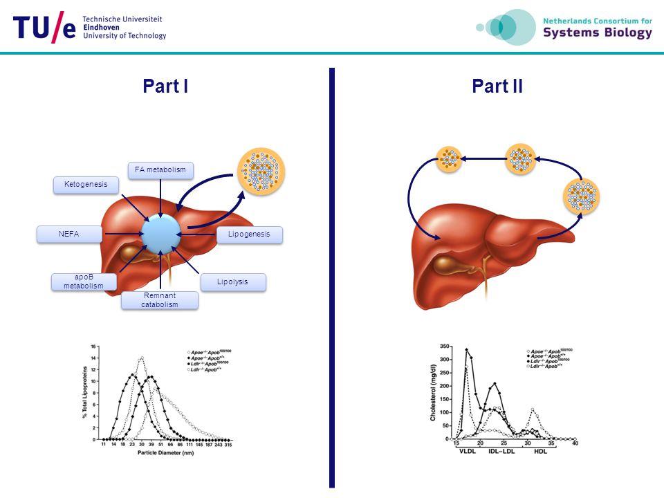 FA metabolism Lipogenesis Lipolysis Ketogenesis apoB metabolism Remnant catabolism NEFA Part IPart II