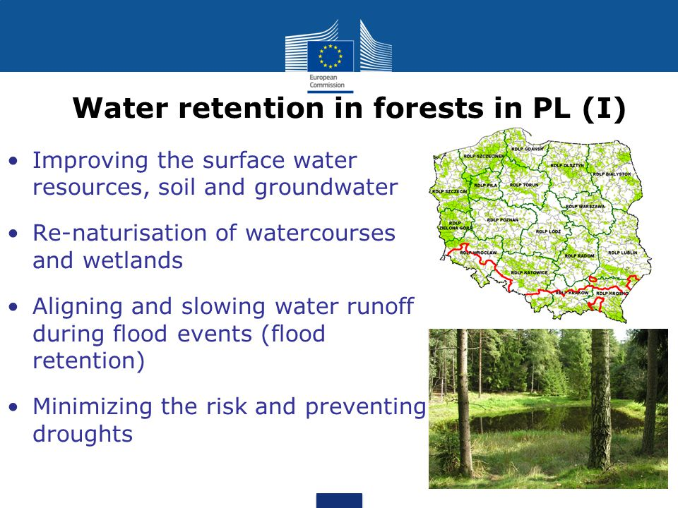 Water retention in forests in PL (I) Improving the surface water resources, soil and groundwater Re-naturisation of watercourses and wetlands Aligning