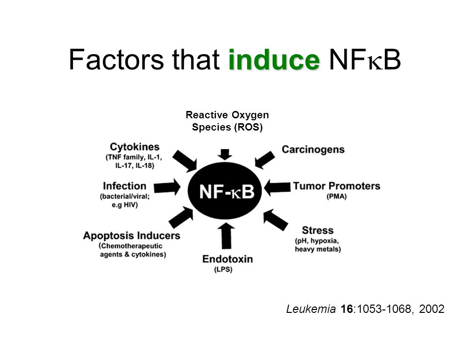Leukemia 16:1053-1068, 2002 induce Factors that induce NF  B Reactive Oxygen Species (ROS)