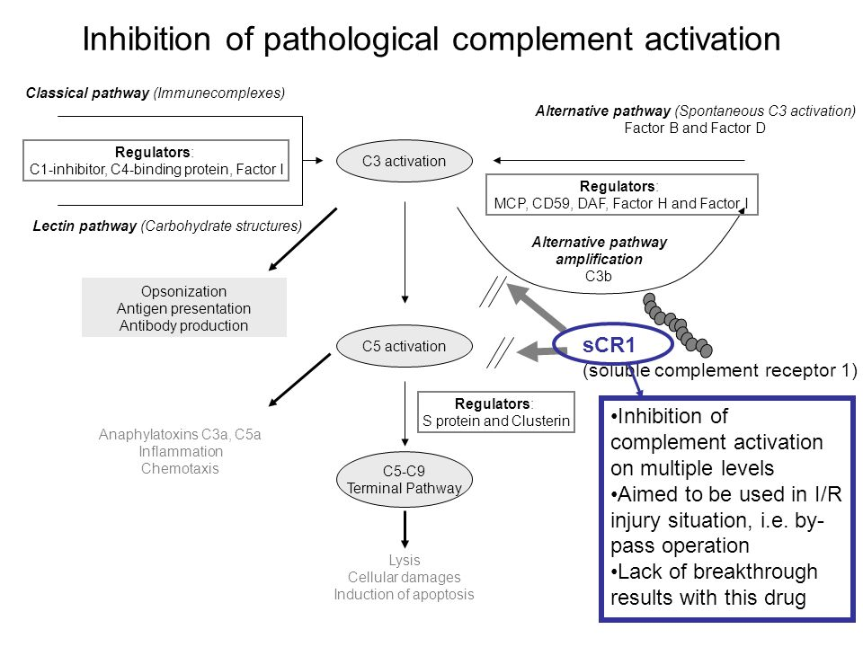 Classical pathway (Immunecomplexes) C3 activation Alternative pathway (Spontaneous C3 activation) Factor B and Factor D Lectin pathway (Carbohydrate s