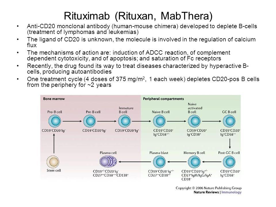 Rituximab (Rituxan, MabThera) Anti-CD20 monclonal antibody (human-mouse chimera) developed to deplete B-cells (treatment of lymphomas and leukemias) T
