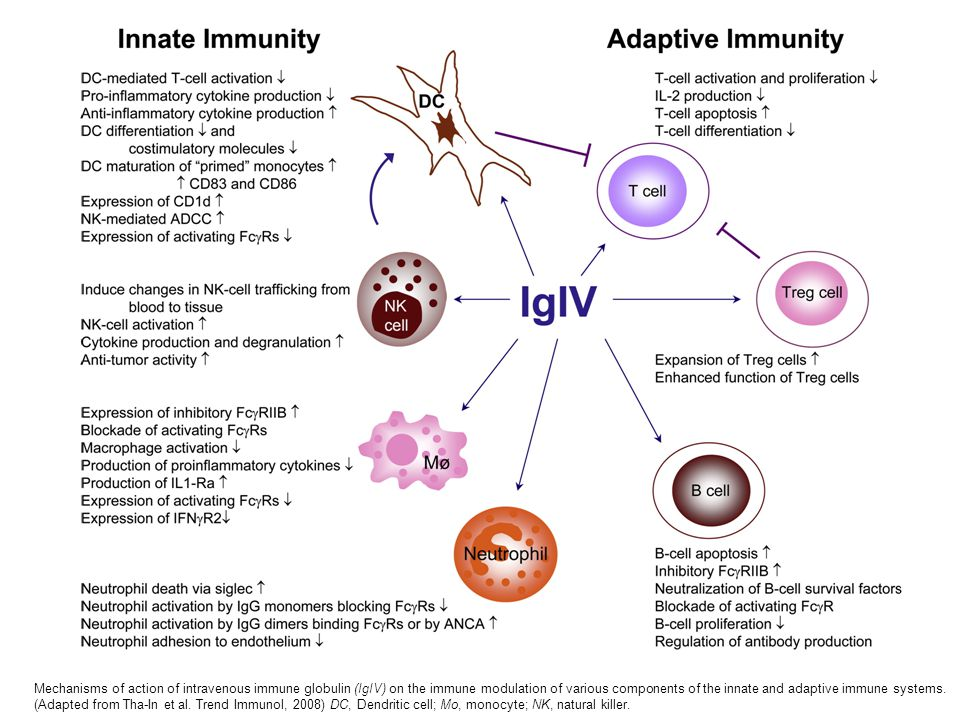Mechanisms of action of intravenous immune globulin (IgIV) on the immune modulation of various components of the innate and adaptive immune systems. (