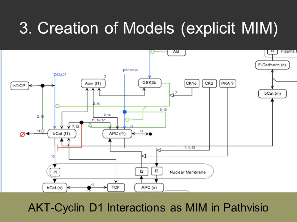 3. Creation of Models (explicit MIM) AKT-Cyclin D1 Interactions as MIM in Pathvisio