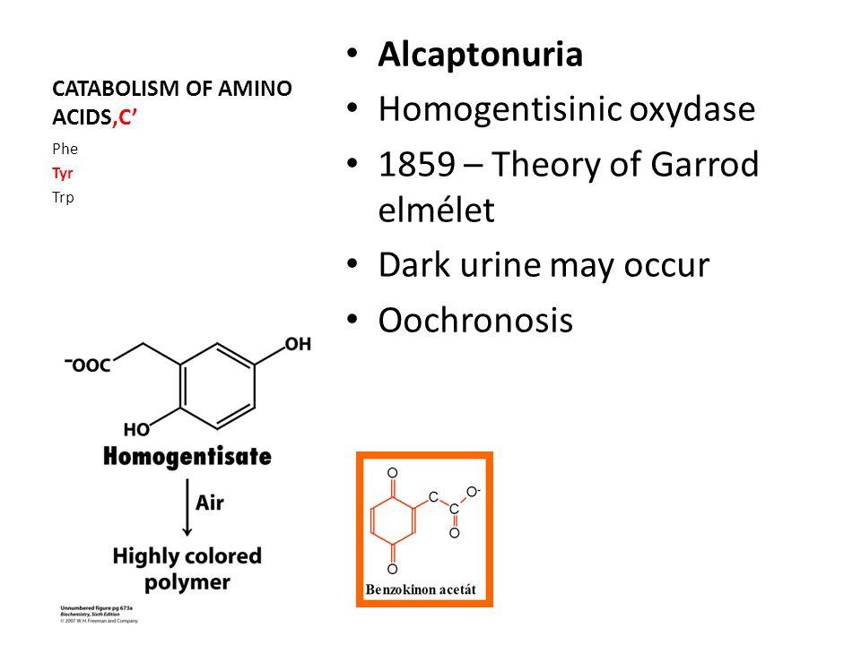 CATABOLISM OF AMINO ACIDS'C' Alcaptonuria Homogentisinic oxydase 1859 – Theory of Garrod elmélet Dark urine may occur Oochronosis Phe Tyr Trp