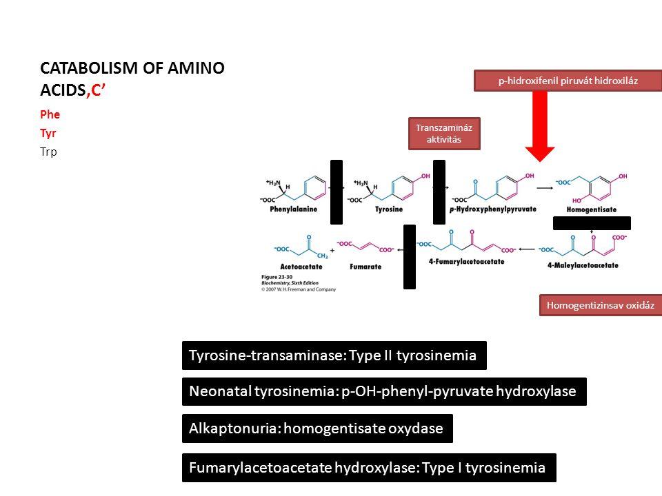 CATABOLISM OF AMINO ACIDS'C' Phe Tyr Trp Transzamináz aktivitás p-hidroxifenil piruvát hidroxiláz Homogentizinsav oxidáz Tyrosine-transaminase: Type II tyrosinemia Neonatal tyrosinemia: p-OH-phenyl-pyruvate hydroxylase Alkaptonuria: homogentisate oxydase Fumarylacetoacetate hydroxylase: Type I tyrosinemia