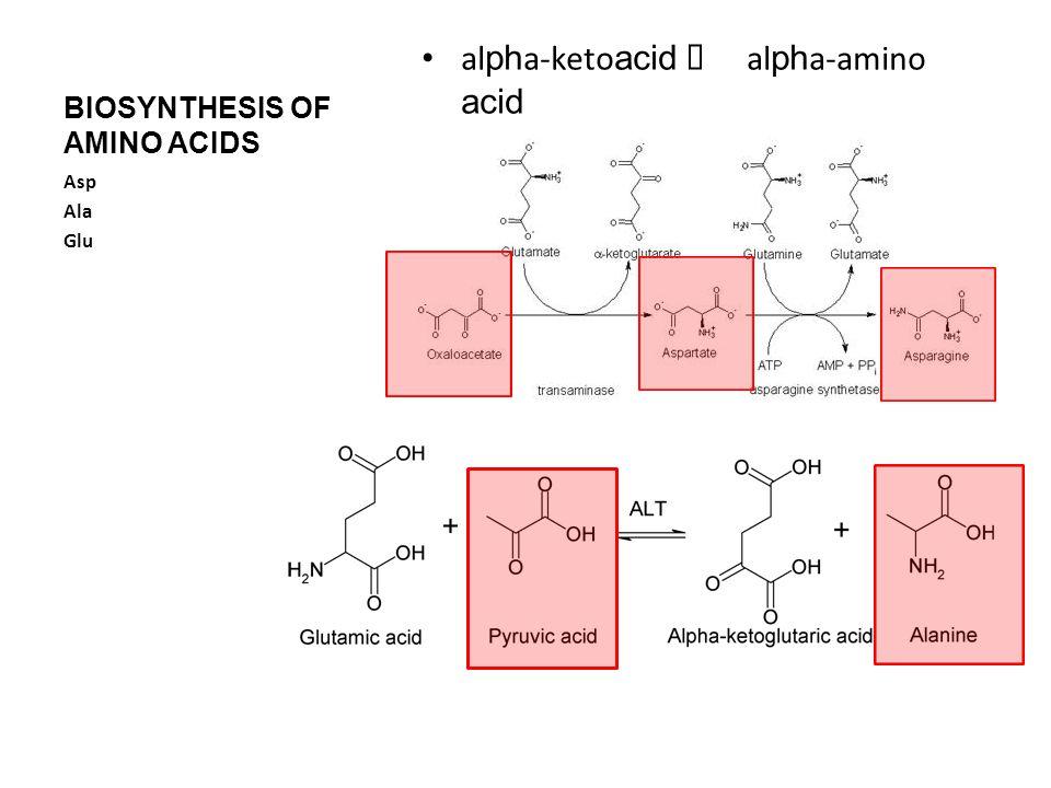 BIOSYNTHESIS OF AMINO ACIDS al ph a-keto acid  al ph a-amino acid Asp Ala Glu