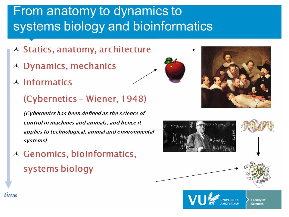 From anatomy to dynamics to systems biology and bioinformatics time  Statics, anatomy, architecture  Dynamics, mechanics  Informatics (Cybernetics – Wiener, 1948) (Cybernetics has been defined as the science of control in machines and animals, and hence it applies to technological, animal and environmental systems)  Genomics, bioinformatics, systems biology