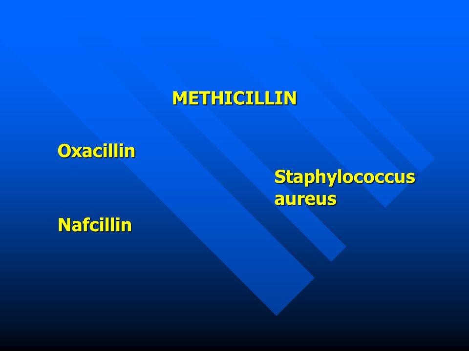 METHICILLINOxacillin Staphylococcus aureus Nafcillin