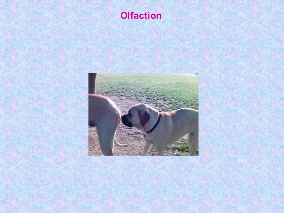 Olfaction